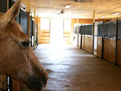Propriétés Equestre